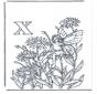 Alfabet X