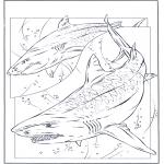 Kleurplaten Dieren - Haaien