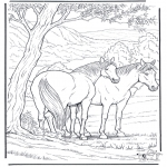 Kleurplaten Dieren - Kleurplaat paard