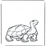 Kleurplaten Dieren - Land schildpad