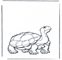 Land schildpad