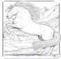 Paard 5