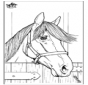 Paard 7