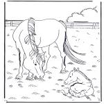 Kleurplaten dieren - Paard en veulen