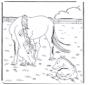 Paard en veulen