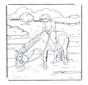 Paard in water