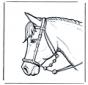 Paardenhoofd 2