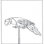 Kleurplaten dieren - Papegaai 3