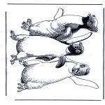 Kleurplaten Dieren - Pinguin 1