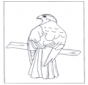 Roofvogel op tak