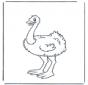 Struisvogel 1