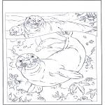 Kleurplaten Dieren - Zeehonden